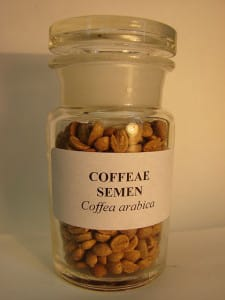 Kaffeesamen Coffea Arabica